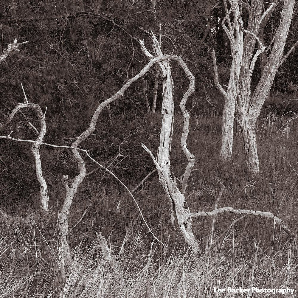 Trees and Grass II, Wellfleet, Massachusetts