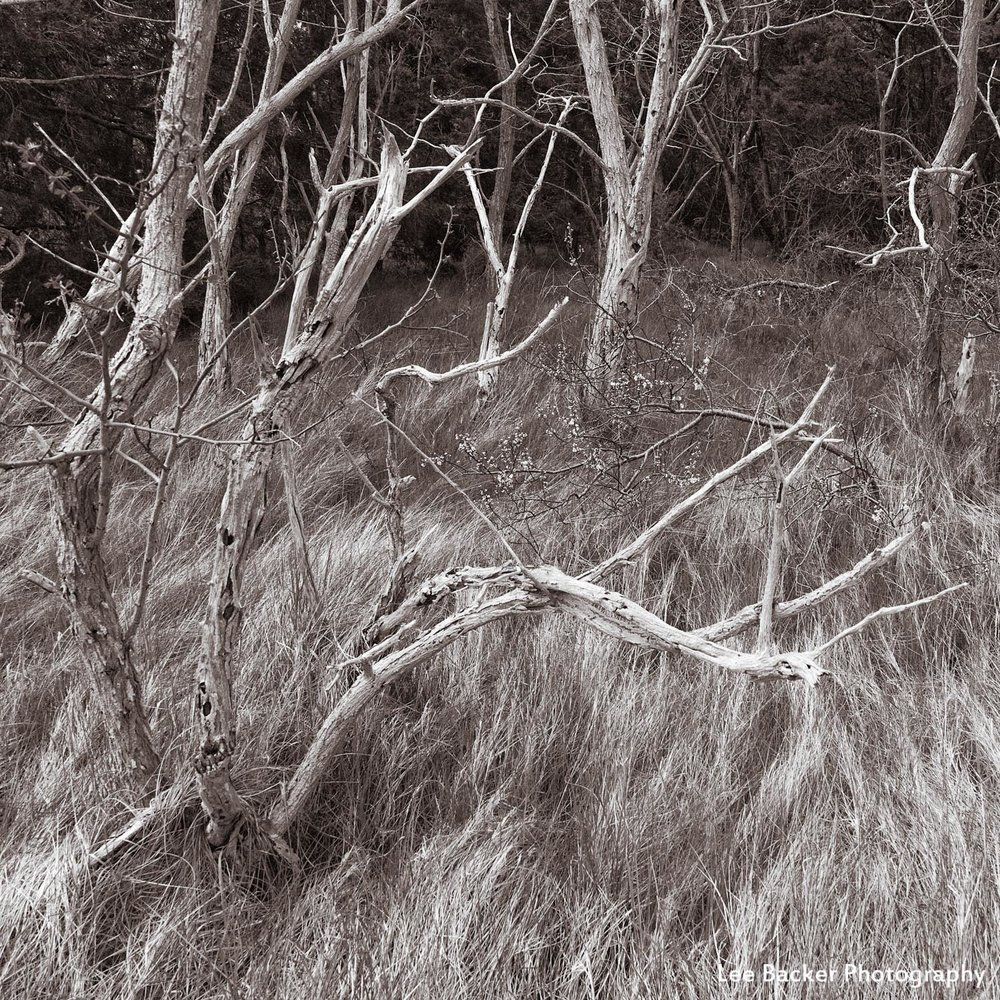Trees and Grass I, Wellfleet, Massachusetts