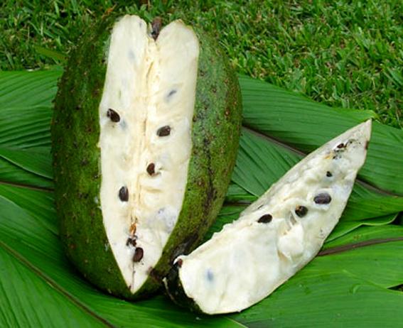 """GRAVIOLA   •""""Yoga i påse"""" dåGraviola har en lugnande effekt och sänker blodtrycket,                 •Innehåller essentiella ämnena såsom Vitamin C, BI och B2.        •Vitt och krämigt fruktkött med en underbar smak!Smaken påminner om ananas med vanilj."""