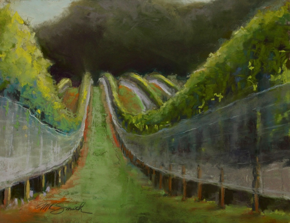 Vineyard Longview.jpg