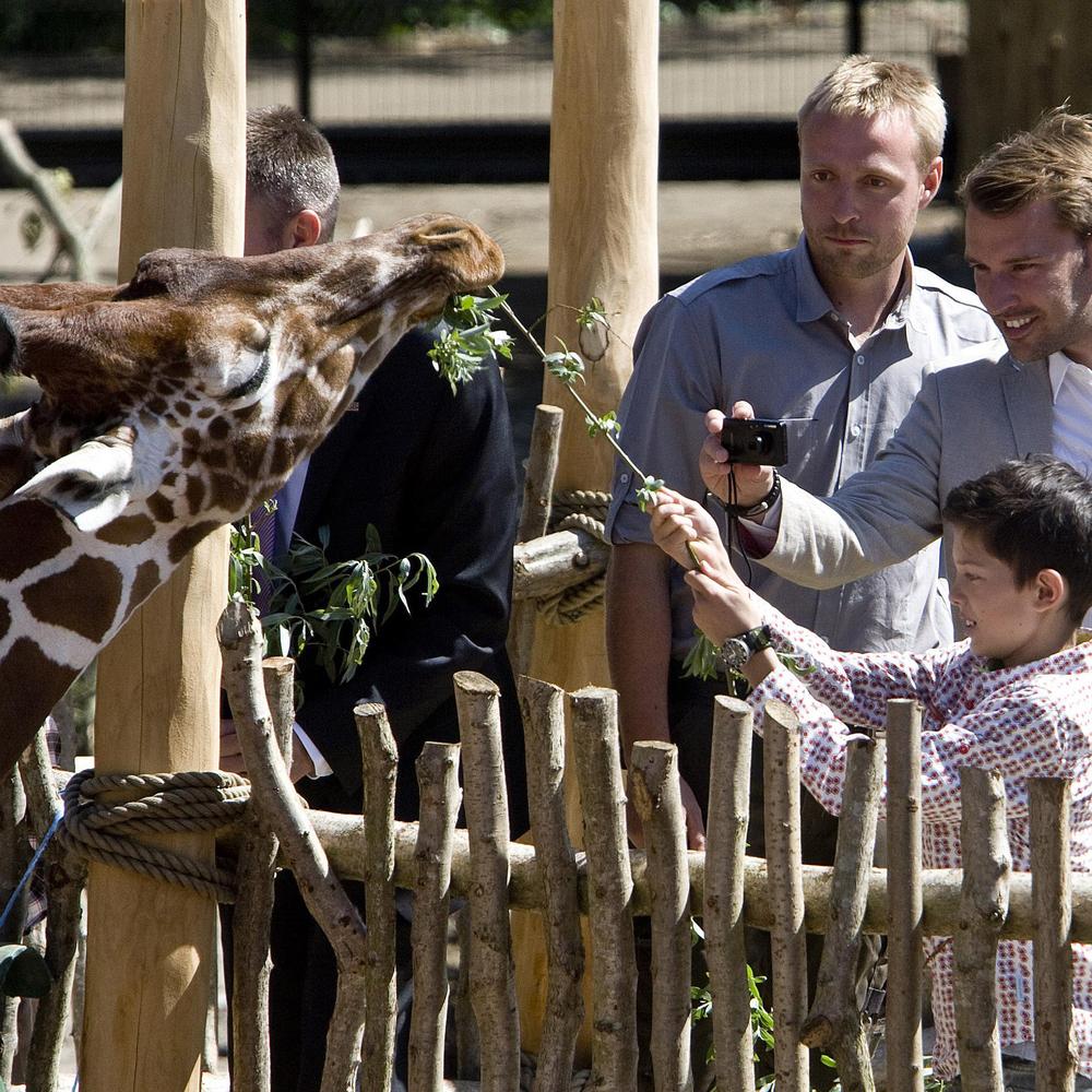 kiwara_giraffe