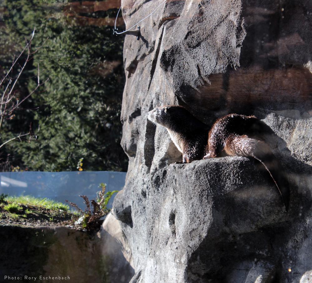 Otter Habitat 01.JPG