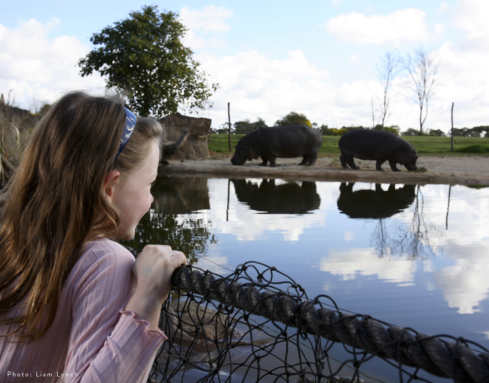 Werribee Open Range Zoo | Hippo River