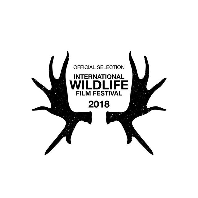 Happy to announce that Mabingwa has been selected to screen at the International Wildlife Film Fest. @wildlifefilmfest #mabingwa #whyilovekenya #documentary