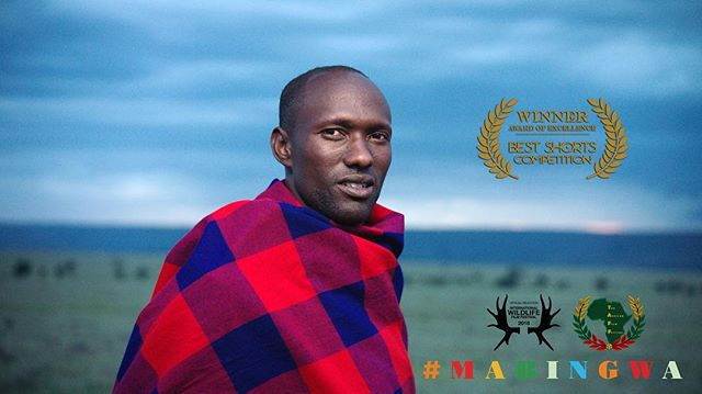 Thanks to @bestshorts for the Award of Excellence in the Nature/Wildlife category! We've also been accepted at @theafricanfilmfestival screening Dallas this Summer! #Mabingwa #filmfestival #kenya