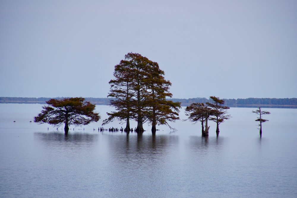 Lake Mattamuskeet in North Carolina.