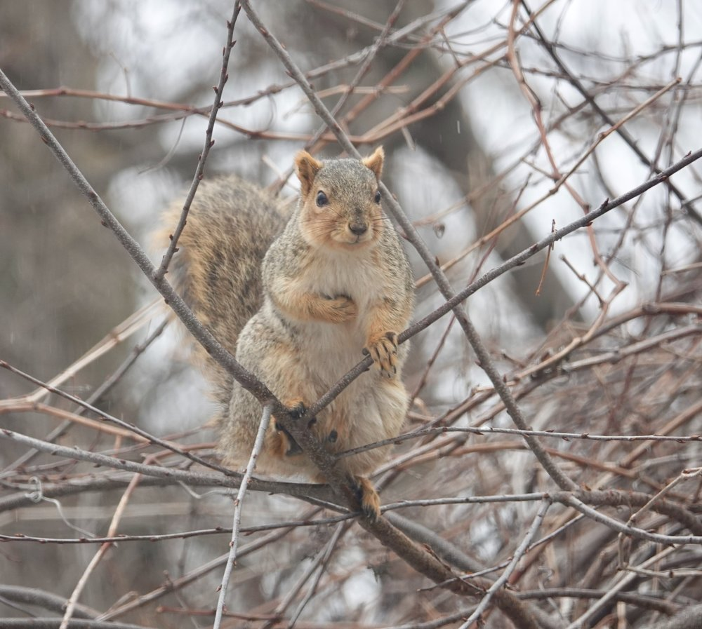 Every day is a parade to a squirrel.