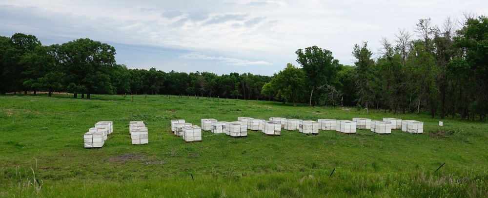 North Dakota is the bee's knees. It produces more honey than any other state.