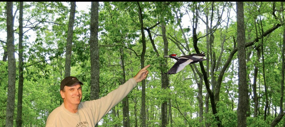 I was excited to see an ivory-billed woodpecker. Even if it was in a painting.