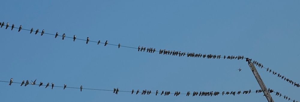 It is the time of year when swallows begin to think about leaving us.