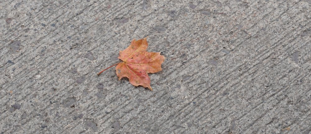 It's that time of the year when the pavement begins to leaf out