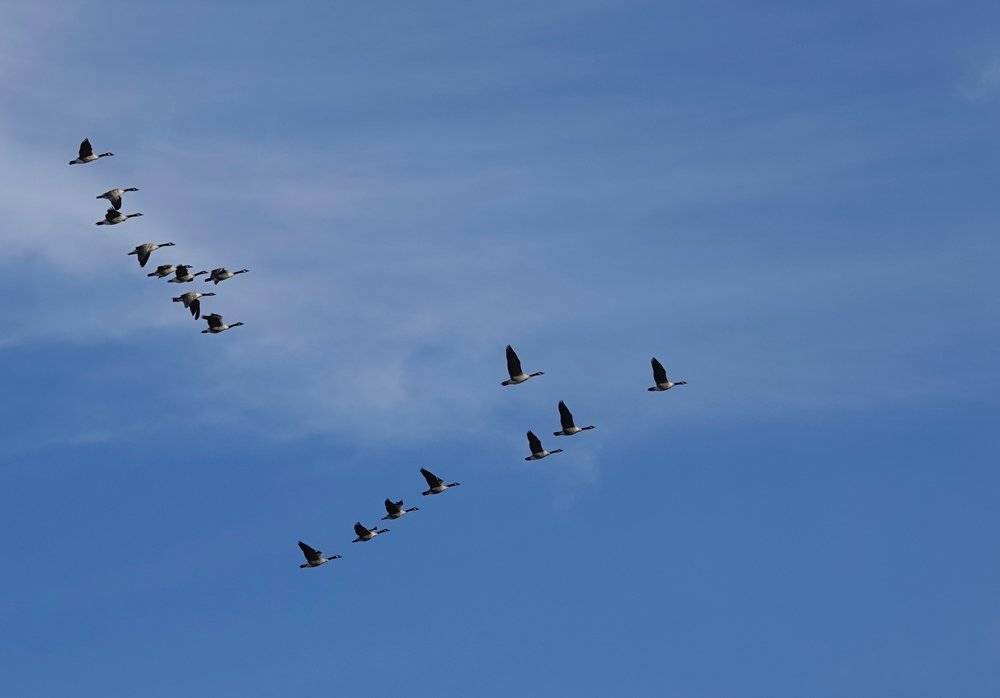 As a young man tethered to a partially harvested cornfield, I'd watch the Canada geese fly over. I'd seen only Minnesota and Iowa. I longed to see what the geese saw.