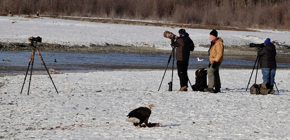 What does an eagle have to do to get his photo taken around here?