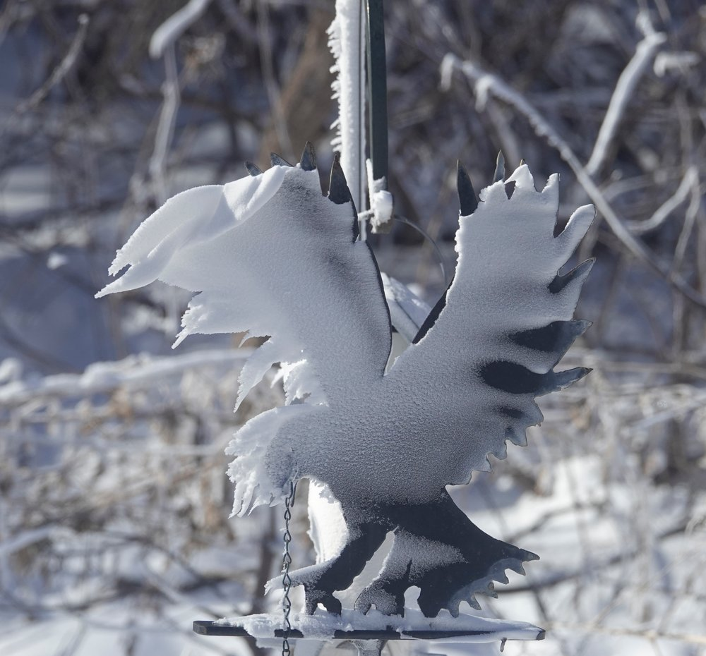 It looked as if the ornamental eagle in the yard was hit in the face with a snow pie.