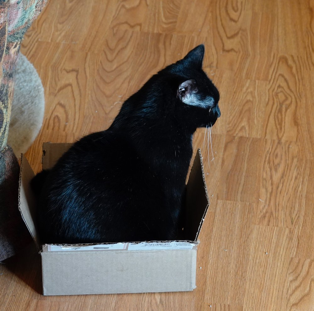 Purl, the cat who never leaves our house, is thinking of moving up a size in her cardboard box wear.