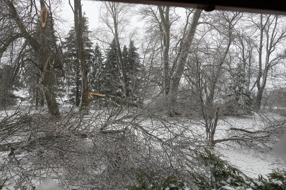 April blizzards bring tree damages to our yard.