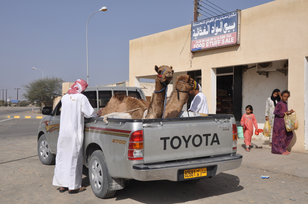OmanCamelCar.JPG