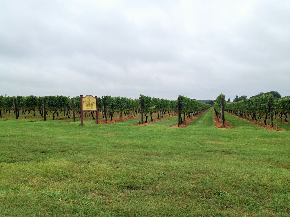 Wolffer Estate Vineyard Hamptons