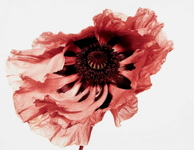 flowers_book_irving_penn_photographer.jpg