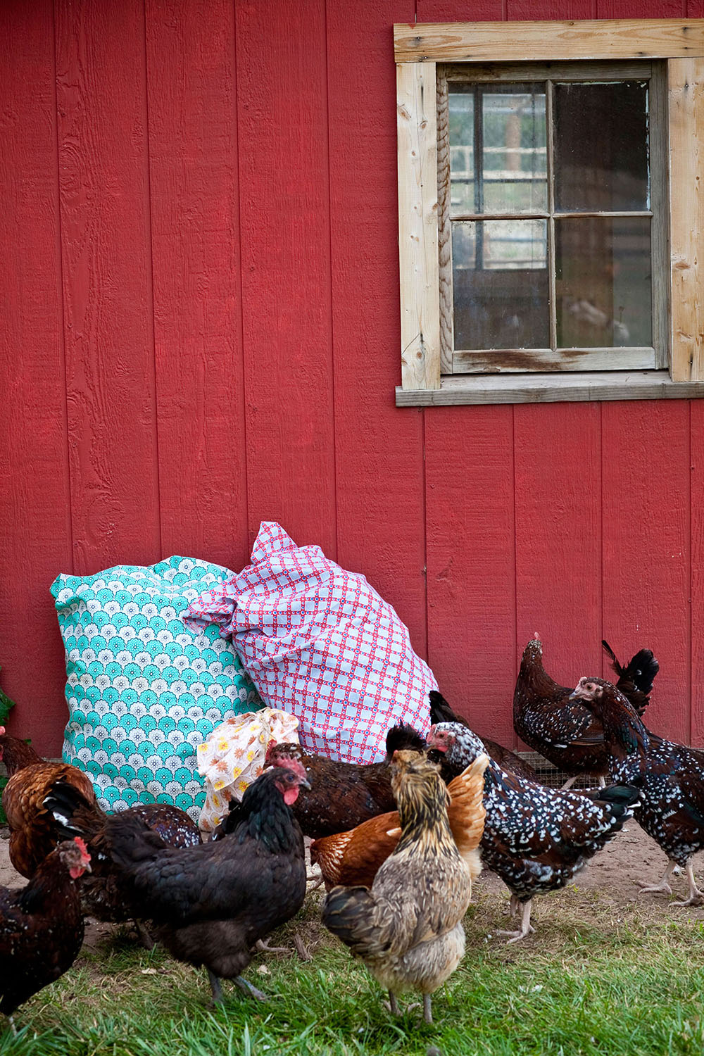 chickens-feedbags-lyons-farmette.jpg