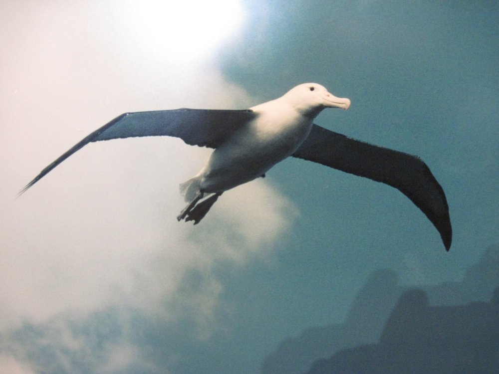 Save the albatross from plastic