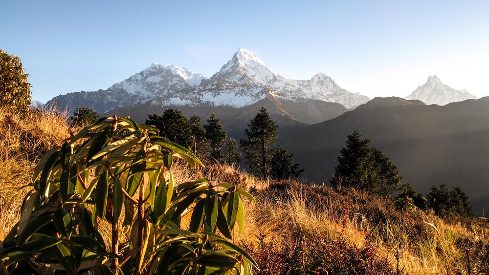 ABC nepal-2303.jpg