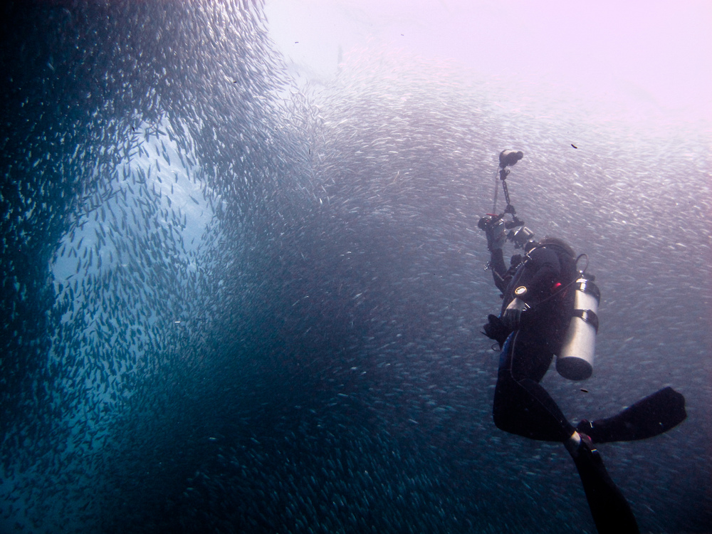 scubadive sardines-8.jpg