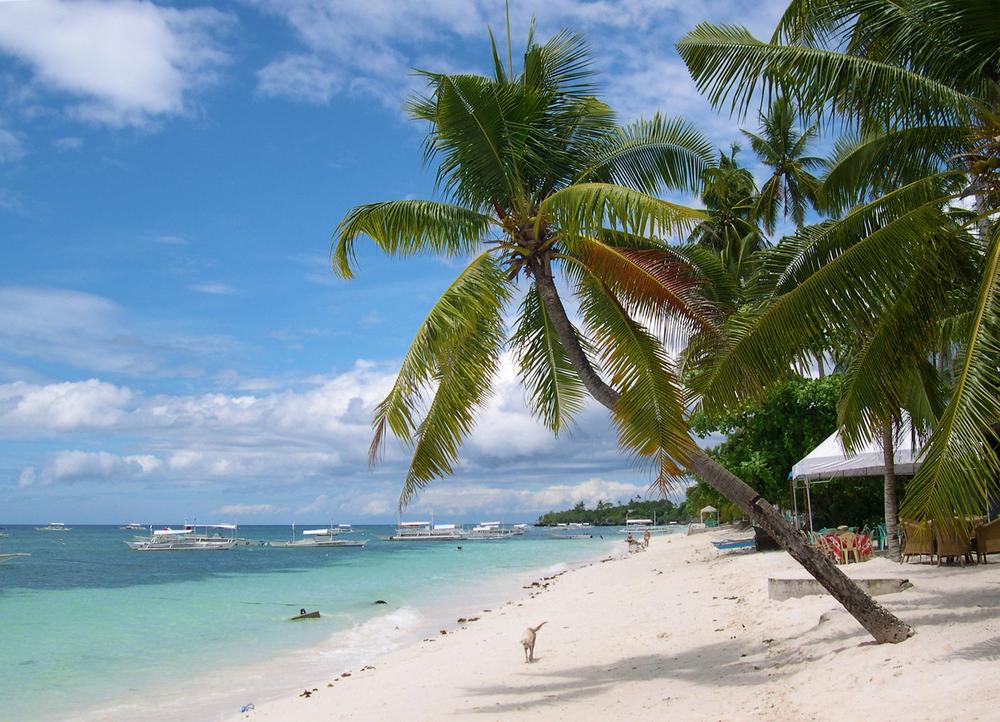 Alona_Beach_Palmtree.jpg
