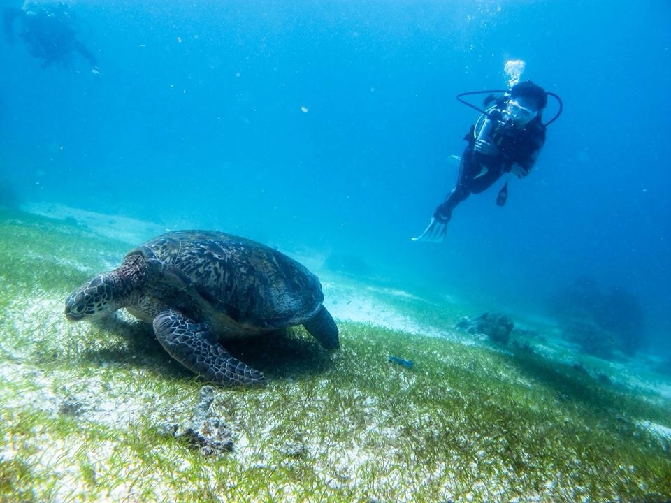 Diver taking Advanced Open Water training dive getting up close and personal witha huge  turtle.