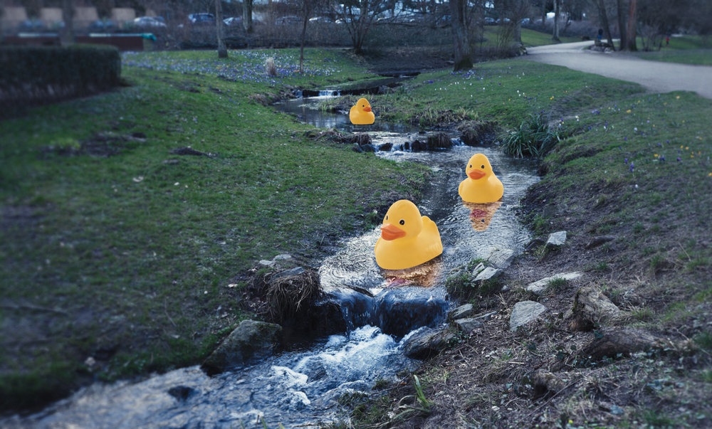 Play-Ducks.jpg