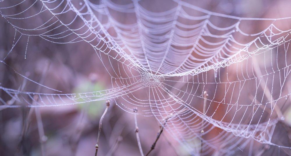 blur-close-up-cobweb-217877.jpg