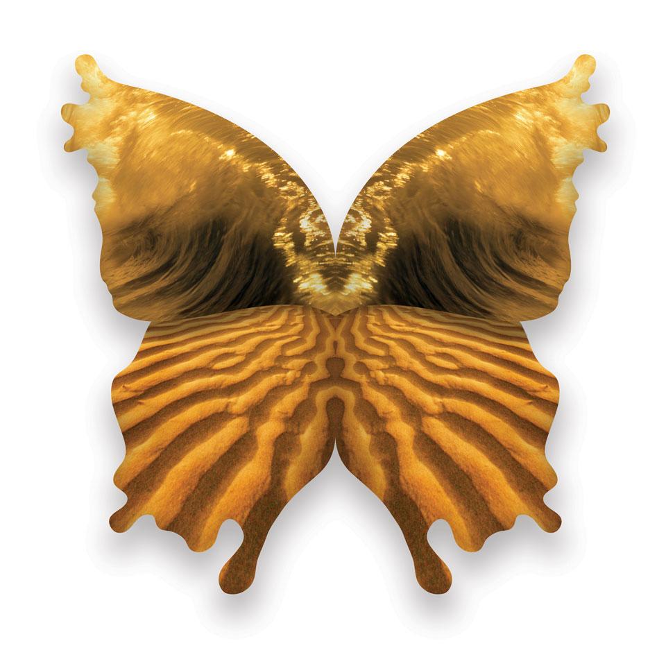 vlinder4.jpg