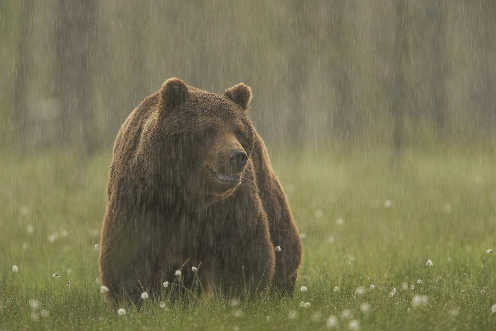 Wildlife Photography Talks