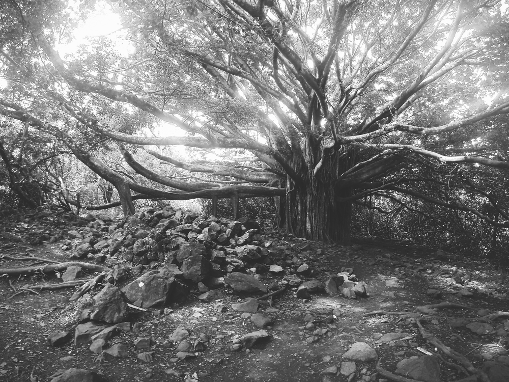 this banyan tree was an incredible network of woody vines that offered a different scene depending on which angle you viewed it from.