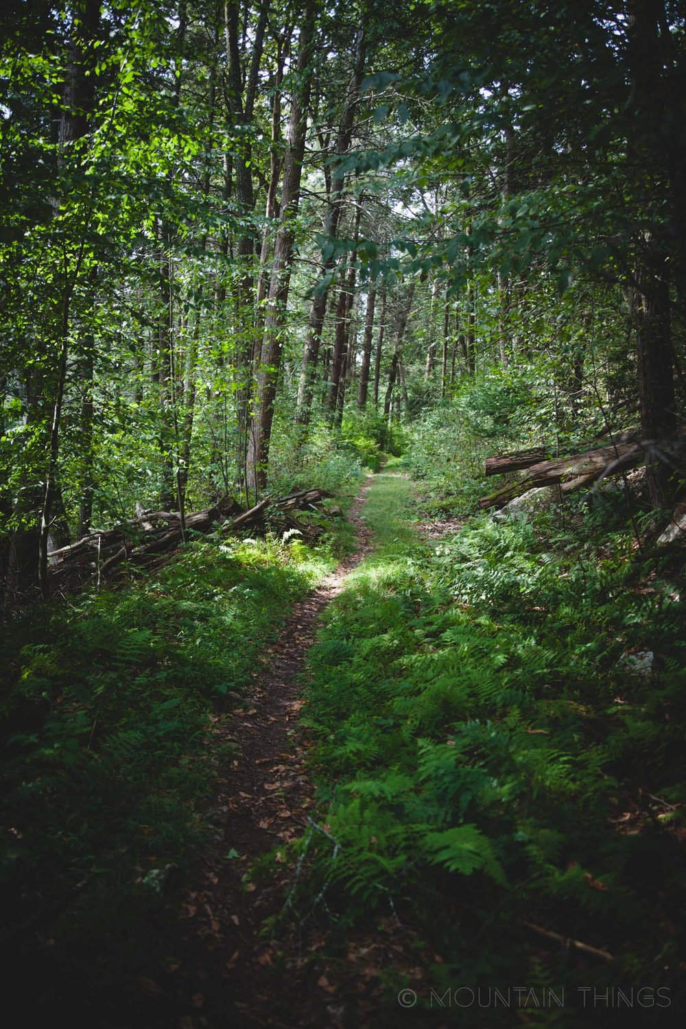Rothrock State Forest in Greenwood Furnace State Park | Mountain Things