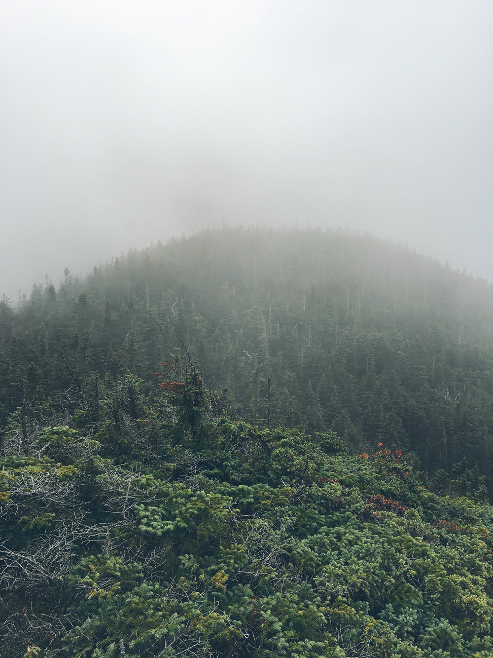 adirondacks-mt-colden-mountain-things (79 of 83).jpg