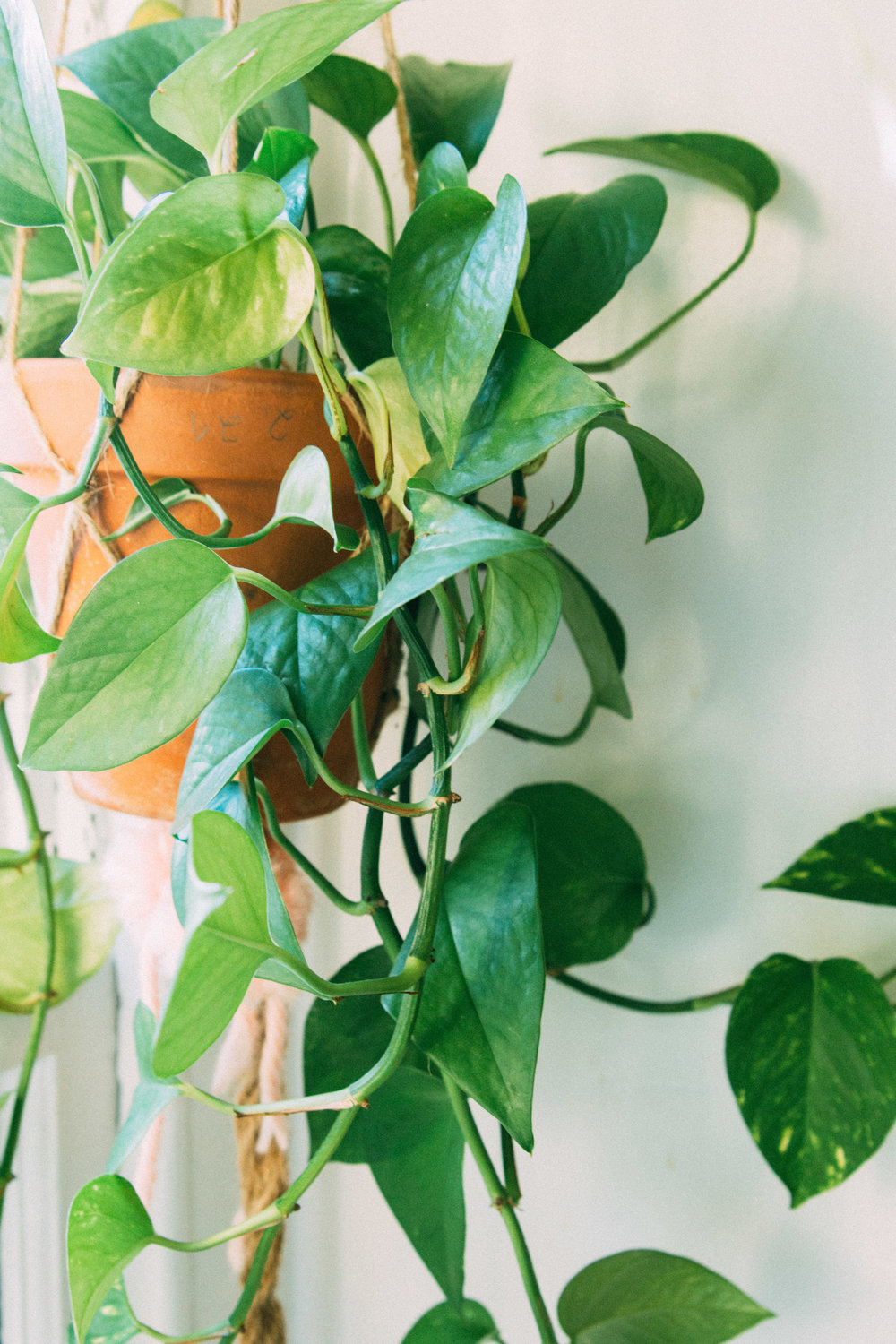 Best Houseplants for Purifying Air-15.jpg