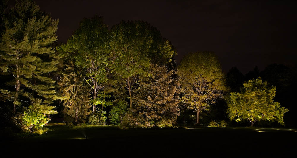 LLI2006overall forest@72.jpg