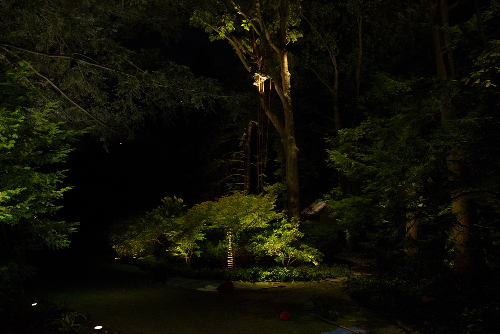 #28 Working with arborists in Area E DE4T4093.jpg