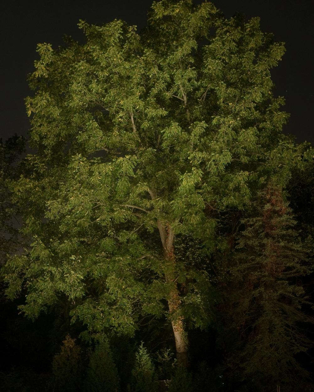 cropped LLI2008-111.jpg