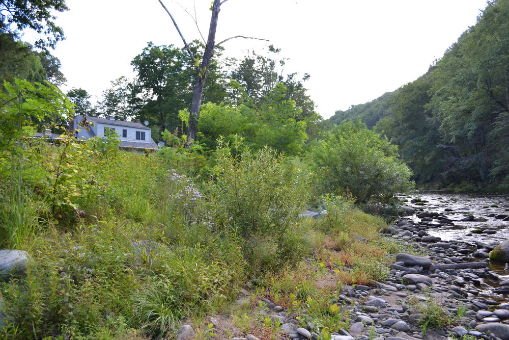 Stream Bank Stabilization with Soil Lifts, Rondout Creek