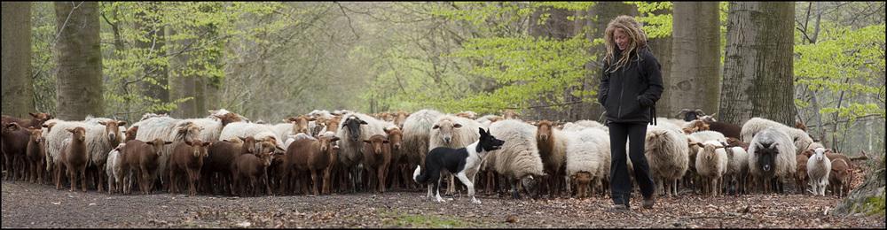lg_schapenbegrazingdrongengoedDSC_3568.jpg
