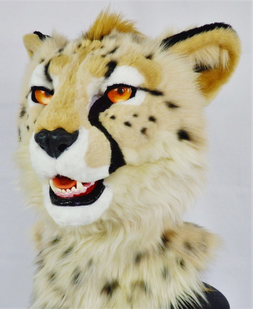 This Cheetah head made a record breaking $950 at the Texas Furry Fiesta 2016 Charity Auction. All proceeds went to C.A.R.E. the Center for Animal Research and Education.