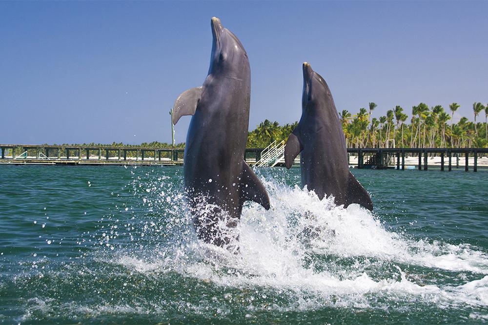 wisdom_0003_dolphin experience punta cana12.jpg