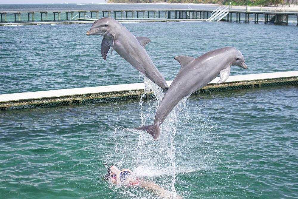 wisdom_0005_dolphin experience punta cana10.jpg
