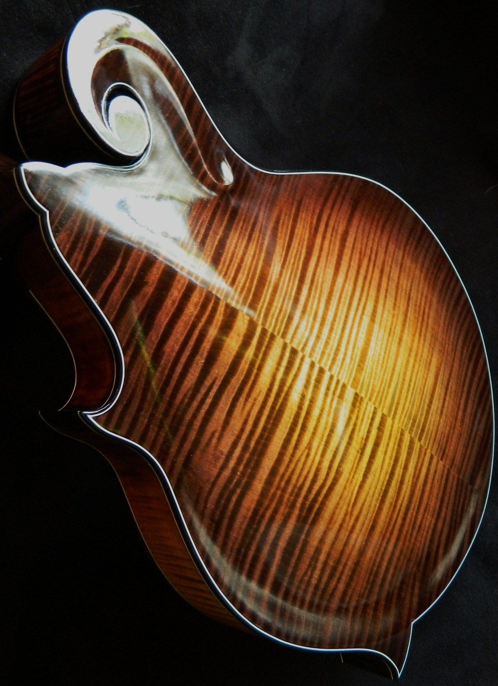 F8 mandolin, photo by Steve Sorensen.