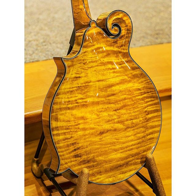 A stunning one-piece back on the 2001 Gilchrist 4C mandolin. Small wonder that Gilchrist is one of the best builders ever. #mandolin #themandolinplayer #classicalmusic #f4mandolin #seattle #americanamusic #handmadeinstruments
