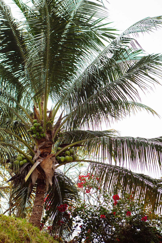 CindyGiovagnoli_Belize_SanIgnacio_ChaaCreek-010.jpg