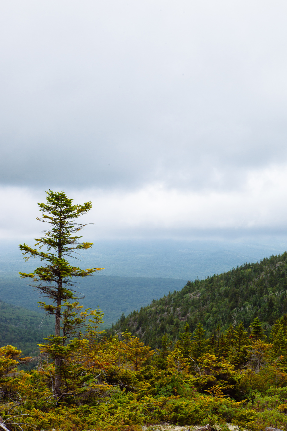 CindyGiovagnoli_BaldfaceCircleTrail_mountains_NewEngland_Maine_NewHampshire-009.jpg