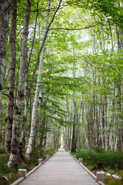 CindyGiovagnoli_AcadiaNationalPark_Maine_MountDesertIsland-006.jpg
